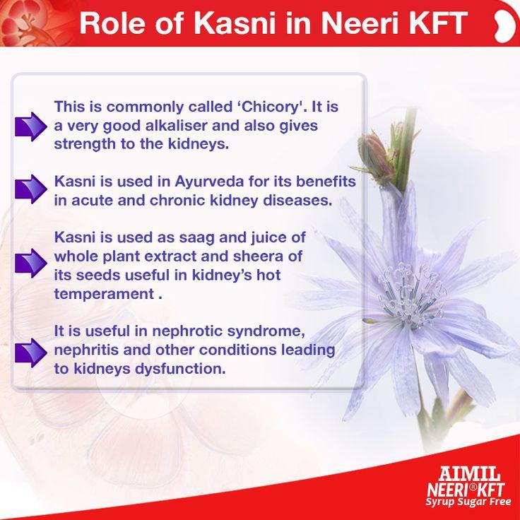 How #Kasni #herb in #NeeriKFT is #useful ? Buy #NeeriKFT (A #natural #KidneyCare ) online from our #PharmacyStore : https://goo.gl/bMVnfo