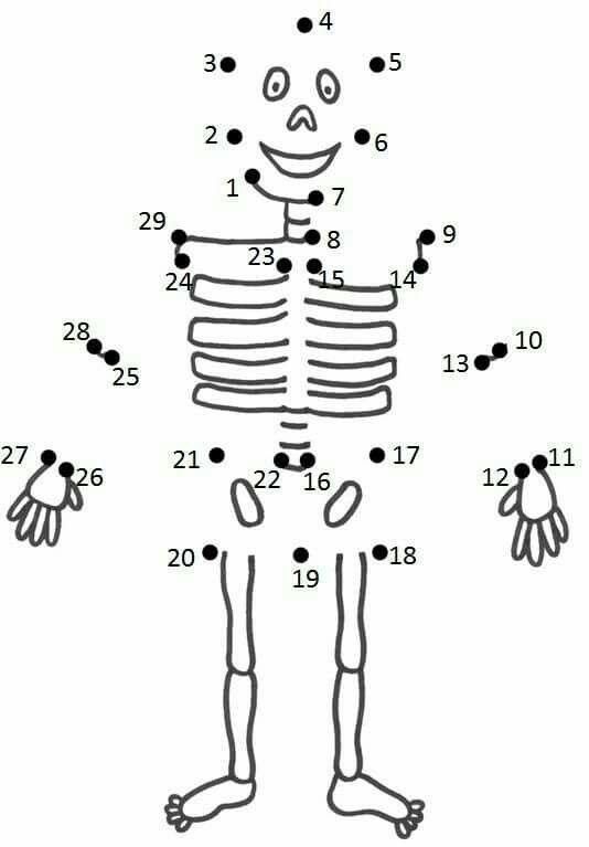 Skelet; verbind de getallen