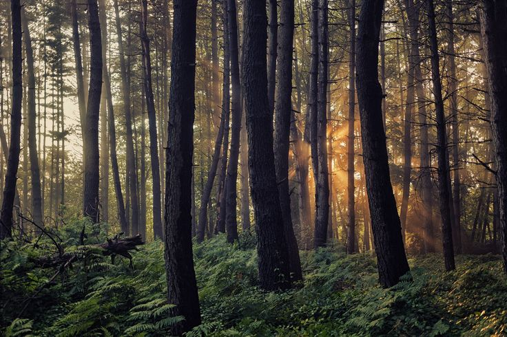 The Woods by Giorgio Galano on 500px