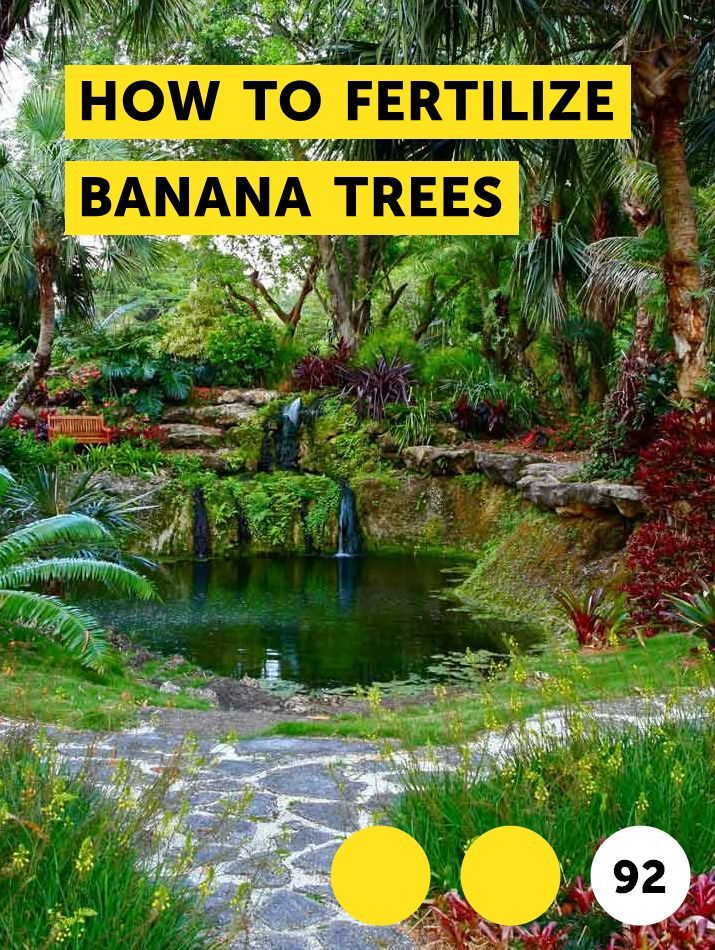 How To Fertilize Banana Trees Growing Vegetables White Flowering