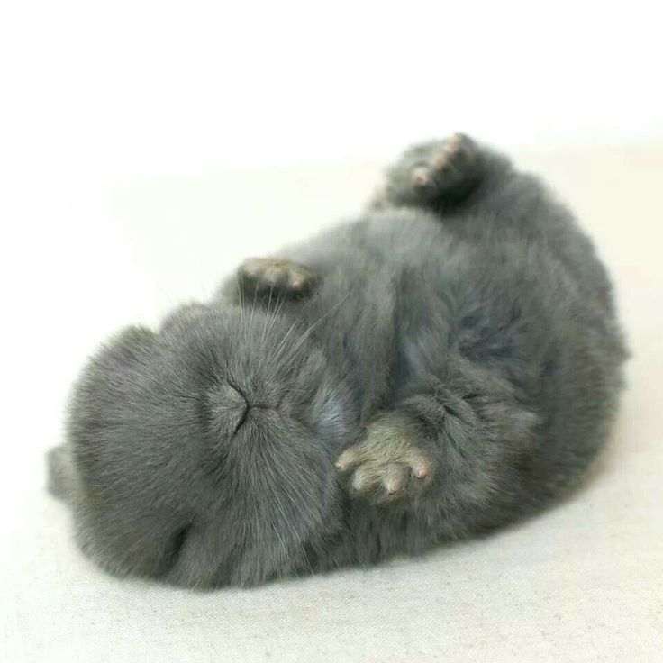 The rabbit is sleeping on its back.