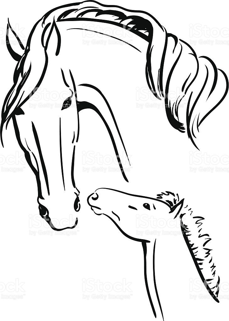Vector Illustration Of A Mare And A Foal Standing Together