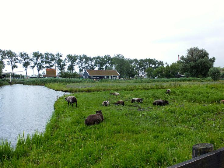 Around Zaanse Schans Windmills, outside Amsterdam, The Netherlands