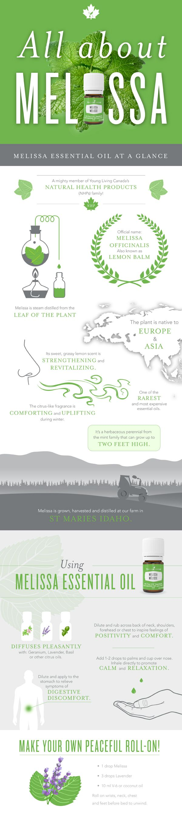 Young Living Melissa essential oil infographic