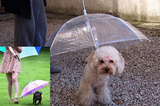 Correa con paraguas para perros