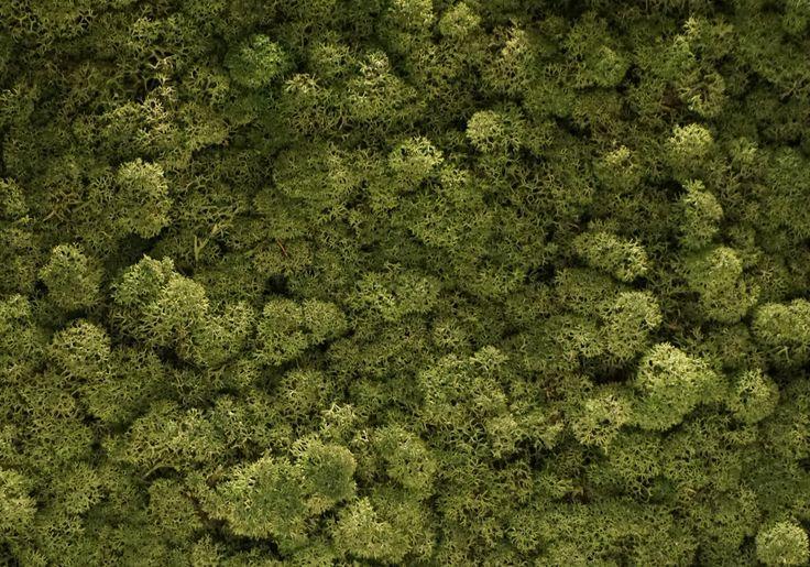 """Torvtak icemoss moss green.  Een Torvtak moswand of mospaneel is een prima alternatief voor levende planten en betekent een decoratieve """"groene"""" verrijking voor iedere ruimte. Bovendien heeft dit Ijslands mos een sterke geluiddempende werking."""