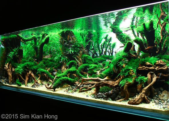 1000+ images about Aquariums, terrariums, vivariums and other ...