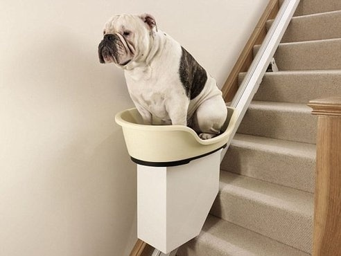fauler hund! n' doggy-treppenlift... fehlt nur sein rollator.