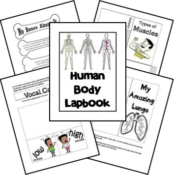 FREE Human Body Unit - lapbook