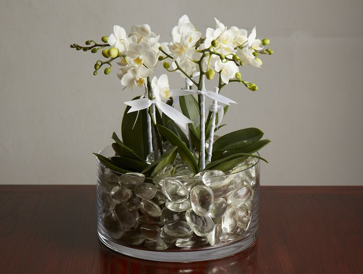 Mini Orchid Plants - Jane Packer New York City