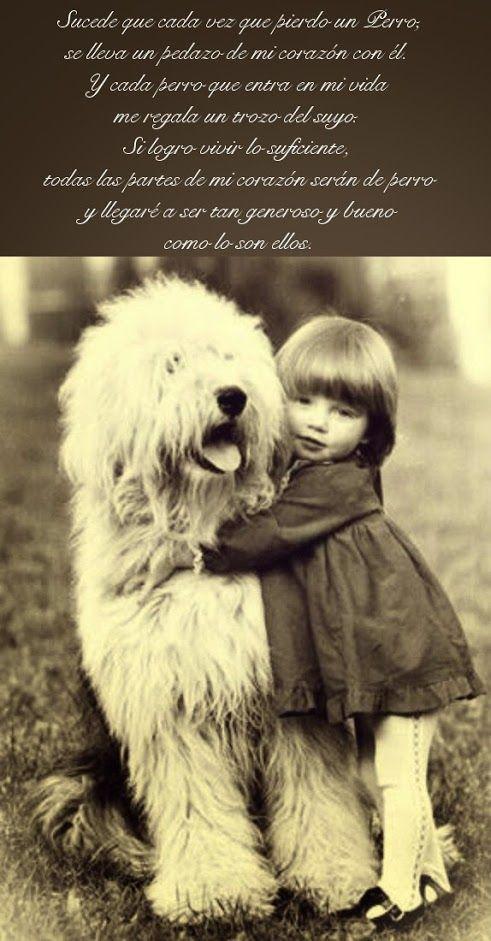 """""""Sucede que cada vez que pierdo un perro, se lleva un pedazo de mi corazón con él. Y cada perro que entra en mi vida me regala un trozo del suyo. Si logro vivir lo suficiente, todas las partes de mi corazón serán de perro y llegaré a ser tan generoso y bueno como lo son ellos"""""""