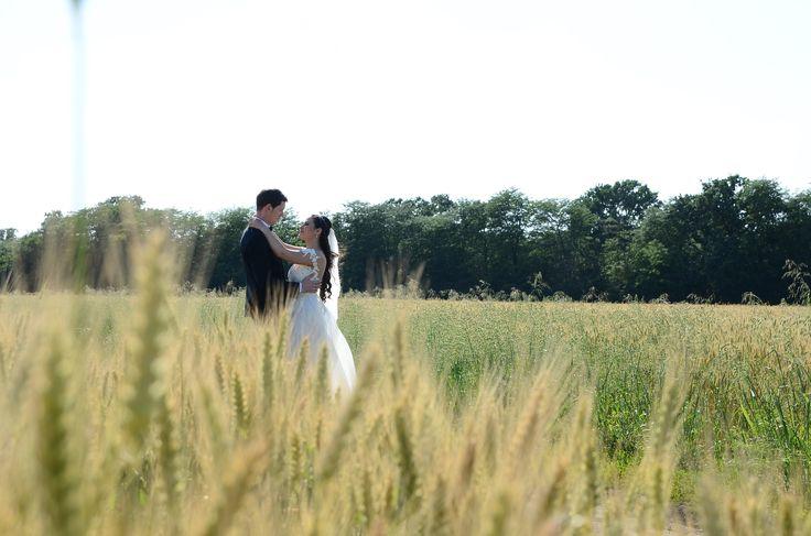 Wedding photo field