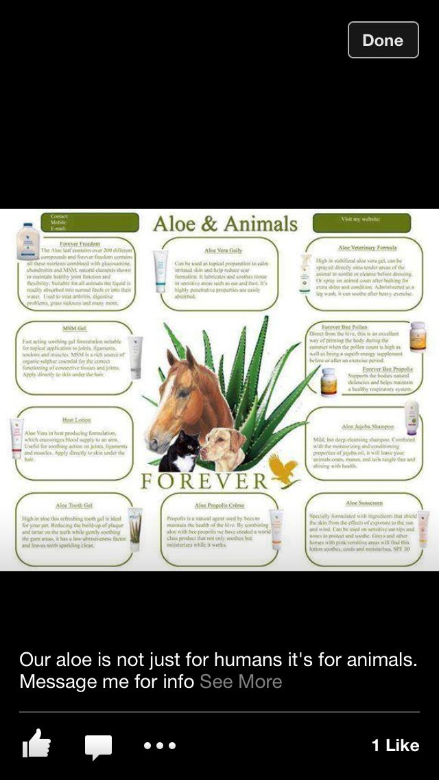 Aloe & Animals