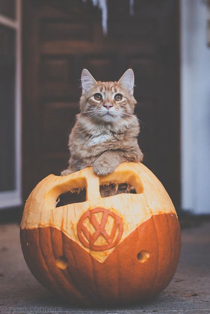 143 Best Halloween Cats Amp Dogs Images On Pinterest
