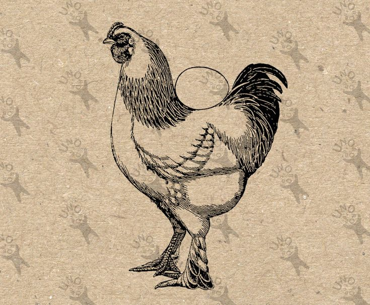 Vintage image Hen Chicken Fresh Egg Instant Download Digital printable retro picture clipart graphic fabric transfer burlap print HQ 300dpi by UnoPrint on Etsy