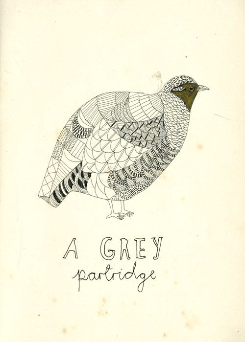 A grey Partridge.