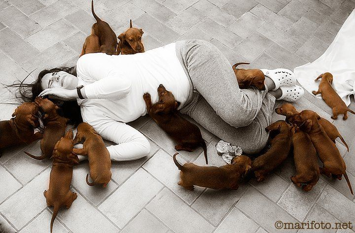 I saw this on Facebook today and it made me smile. WEENIE PUPPIES!