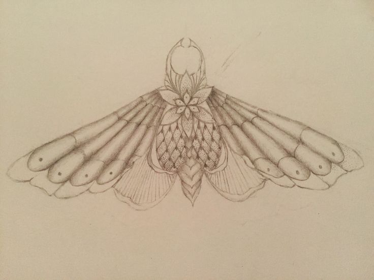 Geometrical moth pencil drawing. A4