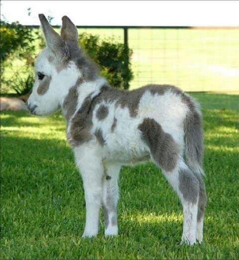 Lil Paint baby Donkey
