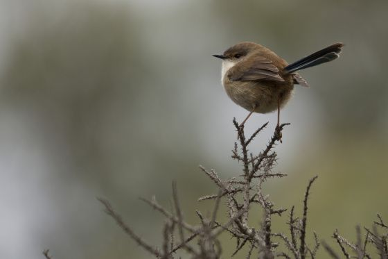 Wren was the last time you were birding?