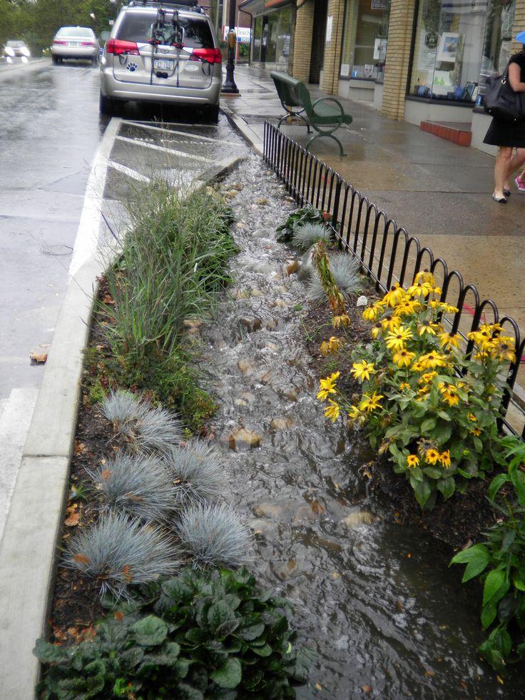 Best 25 Rain Garden Ideas On Pinterest Pond Rocks Rock
