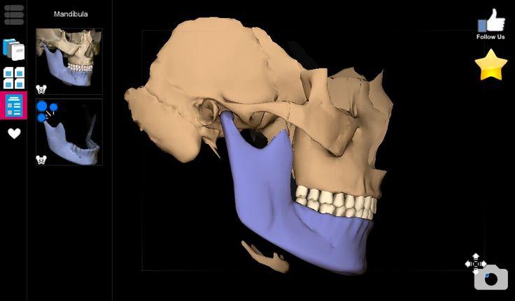Osteologia de cabeza y cuello. Mandibula. Anatomia. Dibujo. Huesos.