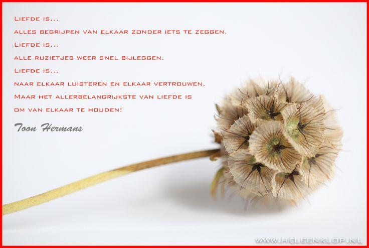 Toon Hermans - Liefde is...