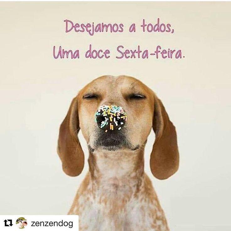 OTIMA SEXTA!!!❤❤❤ #filhode4patas  #amoanimais  #cachorroétudodebom  #cachorro  #amocachorro  #gato  #petmeupet