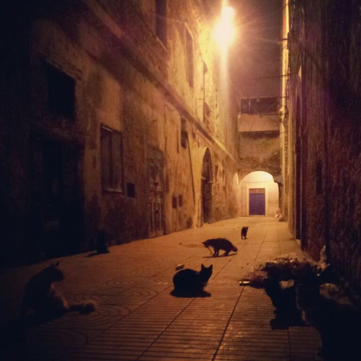 #Maroko, #Marocco, #As-Sawira, #Essaouira, #cats, #night, #instagram, #photography