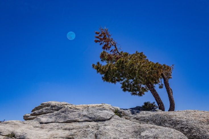 Sentinel Dome – Snowy Tops