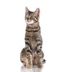 Ontwerp 4: dit is een van de katten die ik in de fles op het water wil stoppen. 1-12-2015