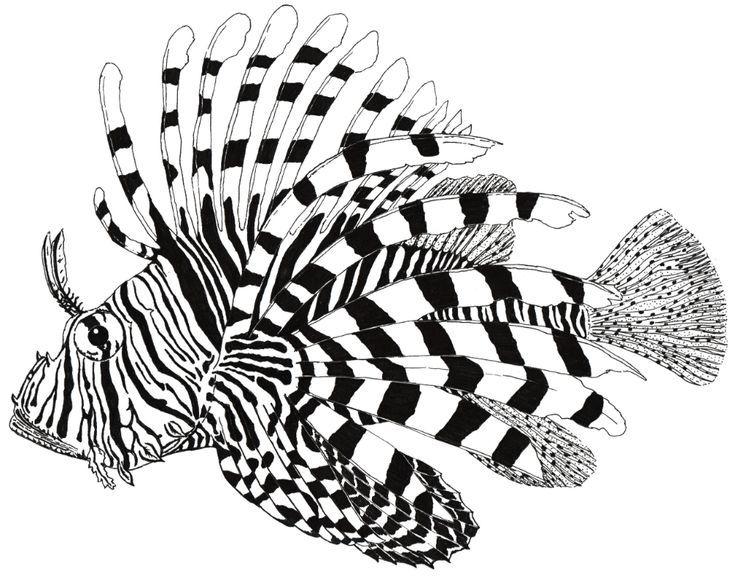 Lionfish Drawing Google Suche Drawing Google Googlesuche Lionfish Suche Lion Fish Drawings Fish Art