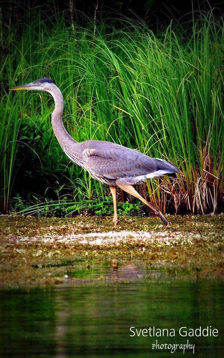 michigan birds   bird #michigan #wildlife   Backyard birds ...