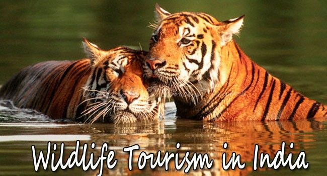 5 Reasons Why Wildlife Tourism Is Increasing In India