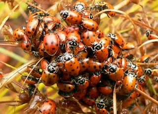 Ladybugs by the river...