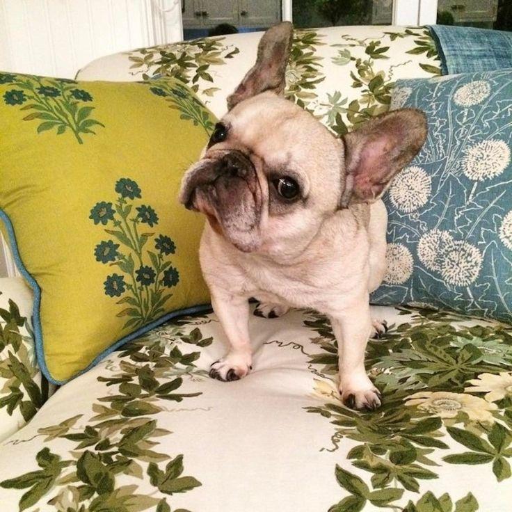 Погуляем?! #Весна же :) @markdsikes #galleria_arben #ткани #шторы #fabric #собака #настроение #декорокна #dog #pillows #подушки #floraldecor