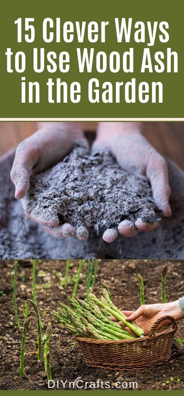 9b83b3fb1242d523afc54bf7fa542766 - Expert Gardener 10 10 10 Fertilizer