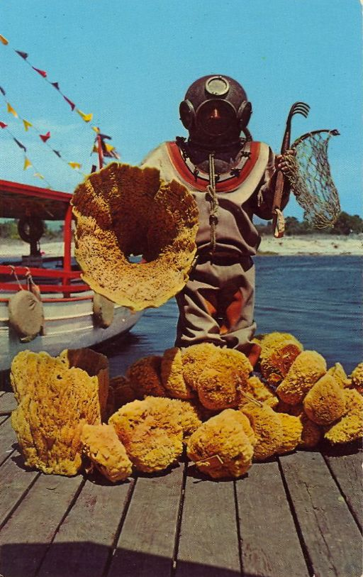 SPONGE DIVER WITH SPECIMEN OF FINE SPONGES AT TARPON SPRINGS, FLORIDA  Facebook: Anna Maria Island Beach Life www.annamariaislandhomerental.com #florida