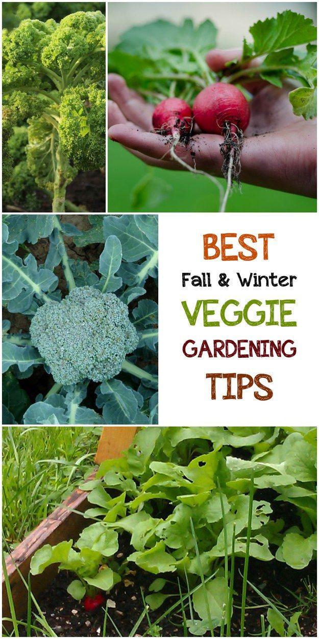 5 Best Fall Winter Veggie Winter Vegetables Gardening 400 x 300