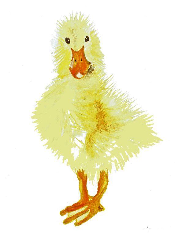 Duckling by jomortimer