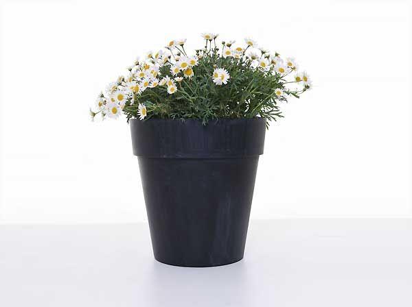 Neu: Pflanzkübel und Blumenkästen mit schickem Breitrand ...
