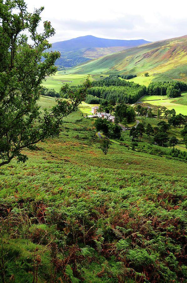 Green Valley In Wicklow Hills. Ireland by Jenny Rainbow
