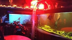 Fish-Tank-150-gallon-with-LED-Lights-Heater-and-Fish