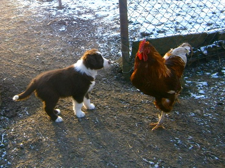 Puppy and cock... I am not afraid ... anybody