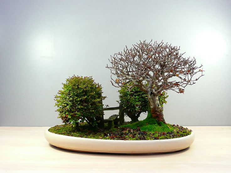 Bonsai with Stile, Dec 2010 by Chris Guise