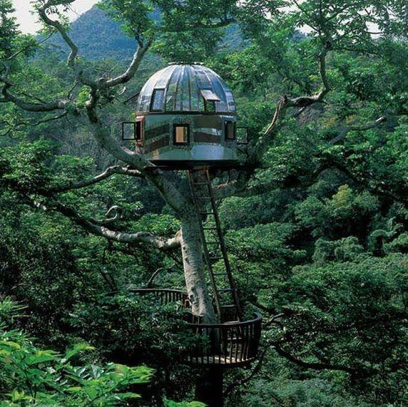 tree hut.