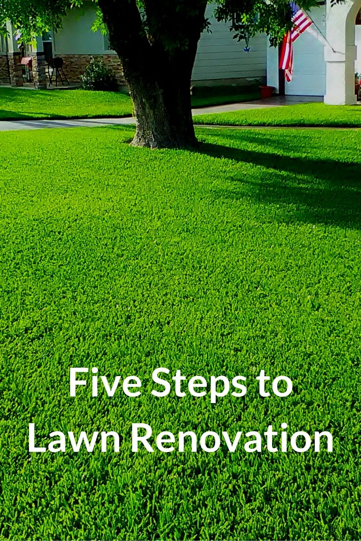 25 best ideas about growing grass on pinterest grasses planting grass seed and yard landscaping for A b lawn and garden