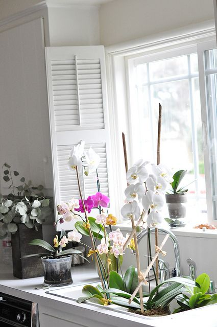 my kitchen window orchids in the sink soaking by ...love Maegan, via Flickr