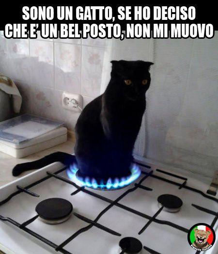 Gatto su fornello