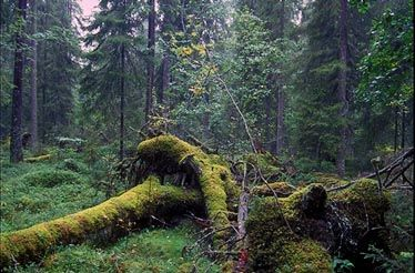 Aarnimetsä - An old forest, just like from a fairytale.